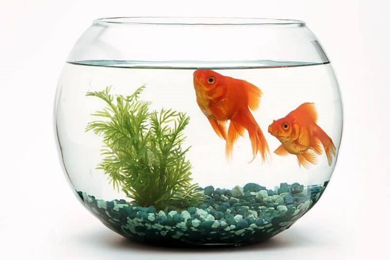 発達障害と金魚の水槽メソッド
