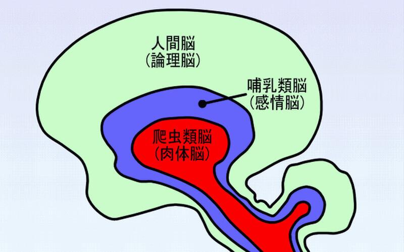 人間の脳は以下の3つのステージにわけられます